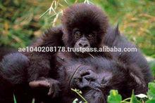 Gorilla Rain Forest Eco Lodge Buhanga