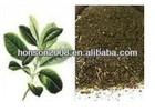 good quality of natural yerba mate extract powder