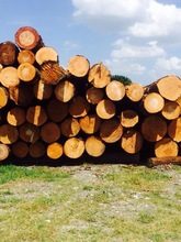 Southern Yellow Pine Logs 20 cm and up, 25 cm and up