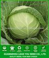極めて早期に成熟度ac531huanglaiハイブリッドキャベツ種野菜