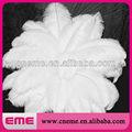 blanco de la boda baratos decoración de plumas de avestruz para la venta