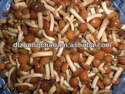 Mushroom raw material