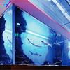 Haijing Rectangle Acrylic Aquarium Aquaponics Fiberglass Fish Tank