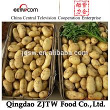 2014 nueva cosecha caliente venta fresca patatas de fresco de la patata