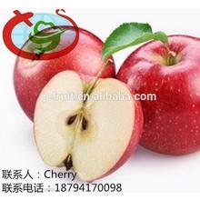 Gala Apple Bulk Fresh Fruit