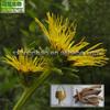 Natural Herbal Extract Elecampane Extract/Elecampane Flower P.E.