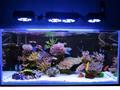 shenzhen migliore programmabile acqua dolce led luce acquario del corallo vasche di barriera con controller smart