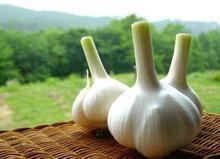 2014 New Crop 5cm-6.5cm 20kg mesh bag pure white and normal white fresh garlic