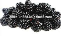 IQF blackberry frozen