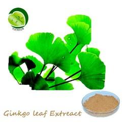 Ginkgopsida herbal extract, Gingko/gingkgo/Ginkgo leaf extreact, 24:6
