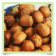 Special grade natural hazelnut