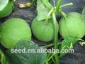 venta al por mayor de china dulce semillas f1