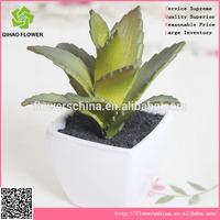 Dedicate artificial aloe bonsai for embellishing