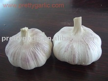 China Normal White Garlic