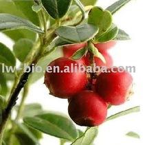 Cranberry extract 4:1, 5%, 15%, 25% anthocyanidins (UV)