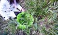 Pe flexible tubtrugs, el agua del hogar cubo, herramientas de jardinería
