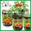 Semillas de tomate en lata, el cultivo de plantas kit