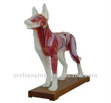 dog acupunture model / PVC dog model