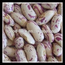 New Crop Light Speckled Kidney Beans, LSKB
