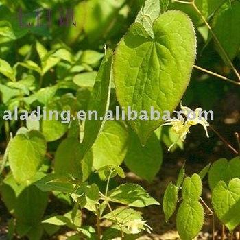 shorthorned Epimedium Herb