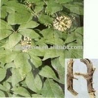 Removing blood stasis Notoginseng Triterpenes 80%