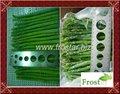 chino espárrago verde congelado
