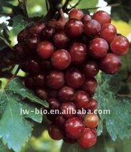 Grape seed extract, latin name Vitis vinifera L.