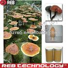 Nature Herbal Extract Ganoderma Lucidum Polysaccharide