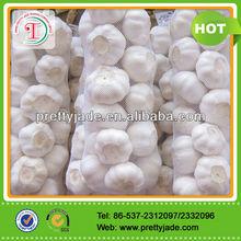 professional supplier of new fresh garlic