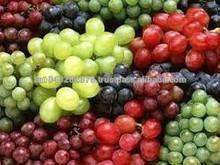 GOOD QUANLITY Fresh GrapesFresh Grapes