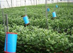 environmental insecticide killer (Manufacturer)