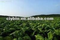Hot sale! Competitive Hot Tobacco Leaf P.E. Powder