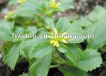 Radix Notoginseng root extract, Radix Notoginseng leaf extract, Panax Notoginsenosides