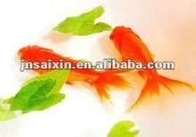 dry dog,cat,fish,shrimp /pet food extruder-by chinese earliest pet food extruder supplier,jinan saixin