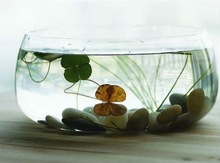 wholesale clear round glass fish bowl glass aquarium