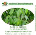Usine de poudre d'extrait de pureté 98% rotenon insecticide