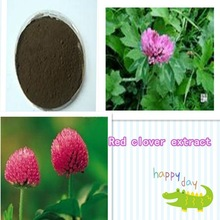 herbal extract 20% Flavonoids Red clover extract
