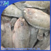 China wholesale seafood fresh frozen tilapia fish food price
