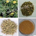 The natural plant extract tribulus terrestris extract 90% thistle saponins
