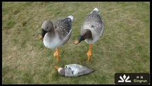 Ourdoors Products ,Wholesale Soft Foam Goose Decoys for hunting Factory Direct Sale