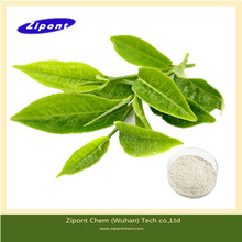 Export High Quality Healthy Organic Green Tea Extract