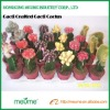 Cactus nursery indoor cactus flowering plants (Grafted red cactus plant)