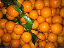 2014 New crop orange mandarin orange baby orange citrus fruit