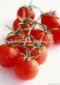 En lata en escabeche de la cereza de tomate