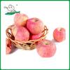 Chinese Fresh Red Fuji Apple/fuji apple