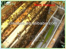 nuevo equipo de apicultura de plástico alimentador de abeja