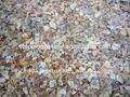 De la madre de perla shell salta para terrazo