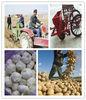 garlic seeding machine/garlic planter machine with high efficiency 0086-18703616536
