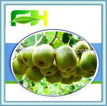 2014 Fresh Kiwi Fruit
