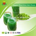 Fabricant de fournir poudre de jus d'herbe de blé biologique